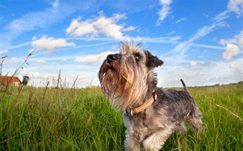 dogs that can be left alone dogs that can be left alone 7 worry free breeds hi5dog