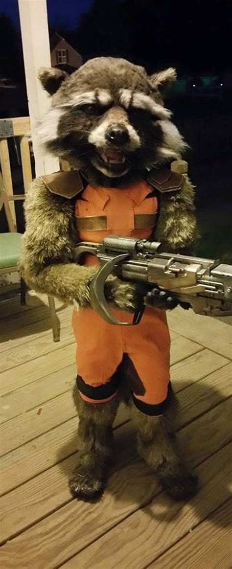 rocket raccoon costume diy kid s rocket raccoon costume guardian of the front porch technabob