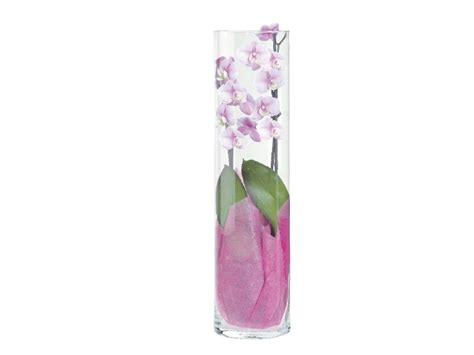 Orchids In A Vase Twin Stem Orchid In Glass Vase Lidl Great Britain