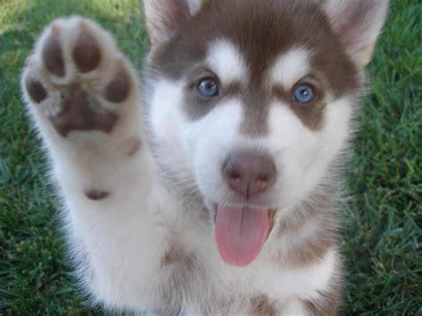 happy puppy i got a feeling 1fatgirlshrinking