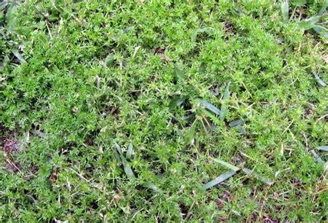Backyard Weeds by Triyae Growing In Backyard Various Design