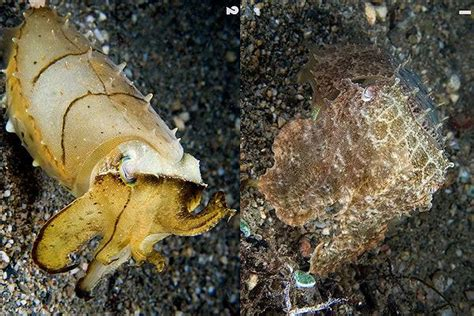how do octopus change color how chameleons squids octopuses and cuttlefish change color