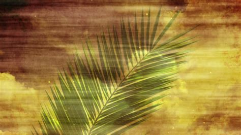 Palm Sunday Leaf Religious Christian Background Motion Christian Motion Backgrounds