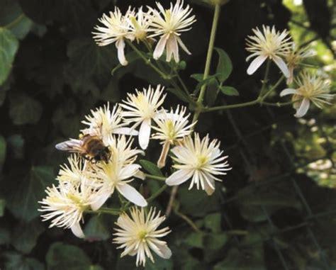 Aprilia Fiori pi 249 concentrati con i fiori di bach news di aprilia in tempo reale