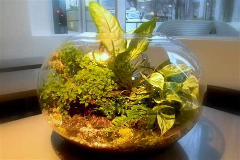 tropical plants for terrariums bloombety tropical terrarium plants with window glass