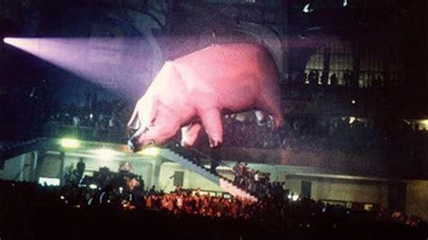 pink floyd  home giant inflatable pig algie