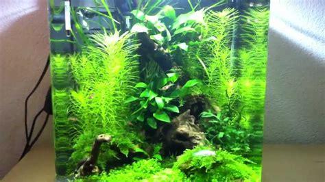 beleuchtung nano aquarium eheim nano aquarium aquastyle 24l