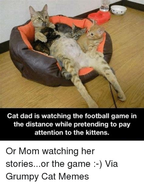 Cat Mom Meme - funny grumpy cat memes of 2017 on sizzle cat memes