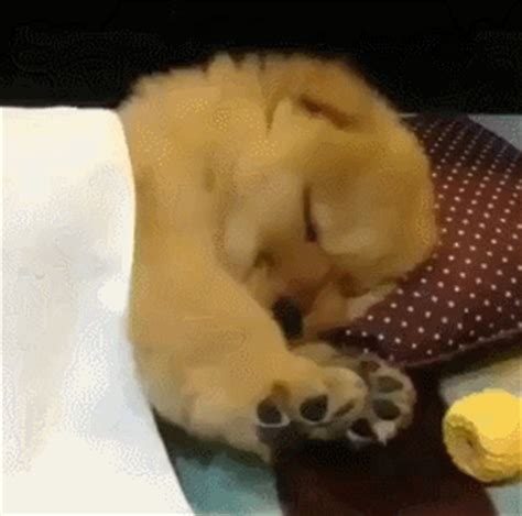 sleepy puppy gif sleepy gifs find on giphy