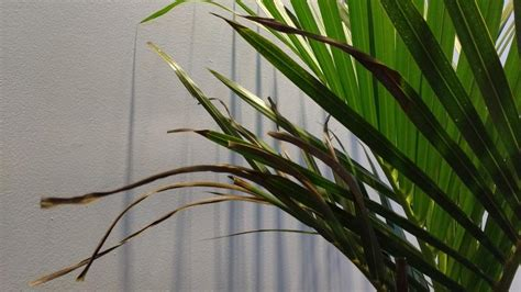 pests  diseases forum small worms  indoor palm