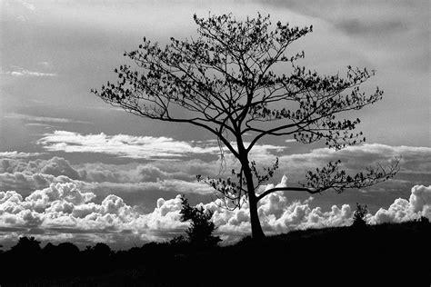 imagenes abstractas blanco y negro hermosas imagenes en blanco y negro page 53 notiforo