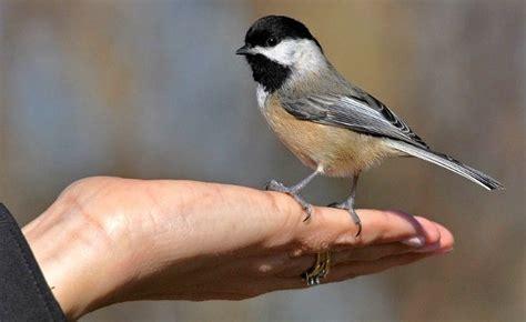 north american backyard birds pin by faye smith on birds pinterest