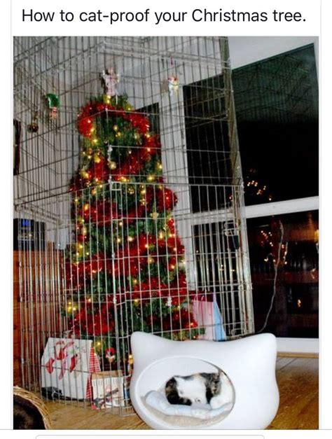 i have a cat need cat proof xmas tree pin by tonya beasley on cats lol