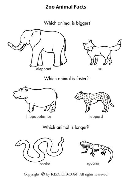 printable zoo animals for preschoolers common worksheets 187 animals printable worksheets