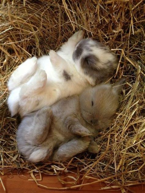 where do rabbits sleep bunny sleeping bunnies pictures photos and images for facebook