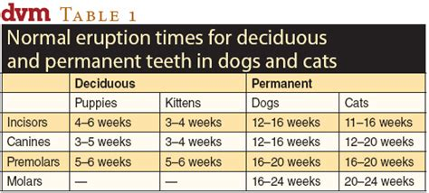 puppy teeth chart image gallery kitten teeth age chart