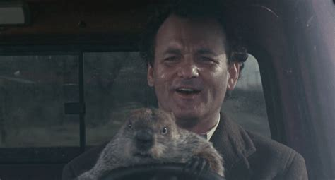 groundhog day driving day groundhog gif find on giphy
