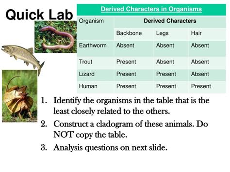 section 18 2 modern evolutionary classification worksheet answers section 18 2 modern evolutionary classification answers