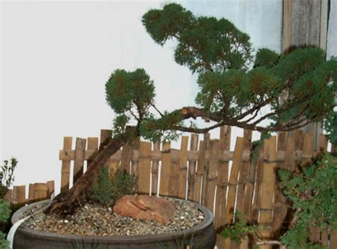 Tagawa Gardens Coupons by Bonsai House Plants Tagawa Gardens Nursery Garden Center