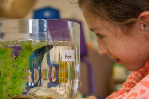 pets   preschool classroom