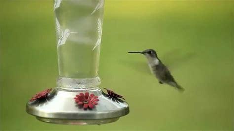 solar lighted hummingbird feeder solar lighted stainless steel glass hummingbird feeder