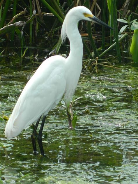 matelic image most common florida birds