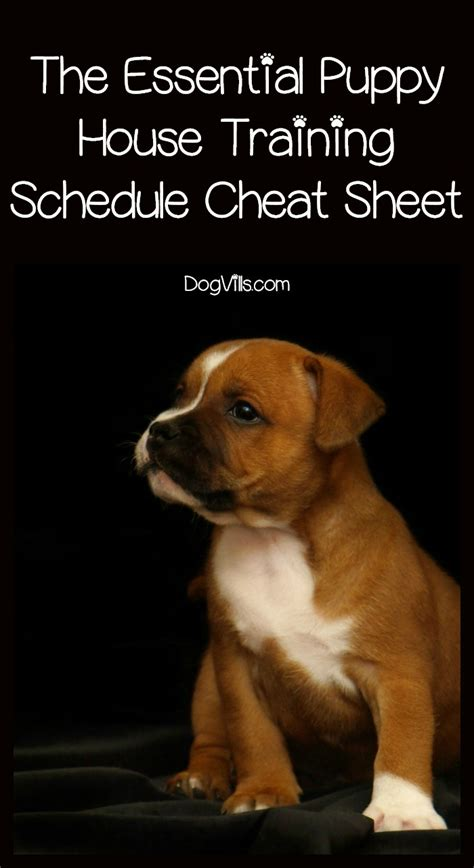 puppy house schedule the puppy house breaking schedule sheet you need dogvills