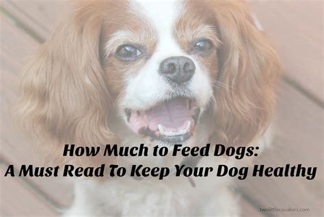 how much to feed your puppy how much to feed dogs a must read to keep your healthy two cavaliers