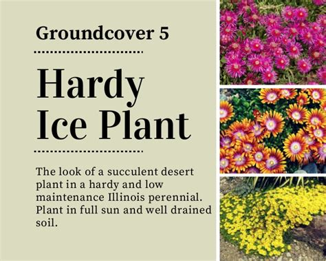 Backyard Ground Ideas 18 Beautiful Amp Unique Groundcover Plants For The Landscape