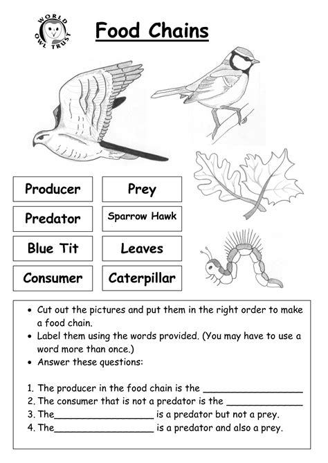 8 best images of ecosystem food chain worksheet high worksheets on food chains food