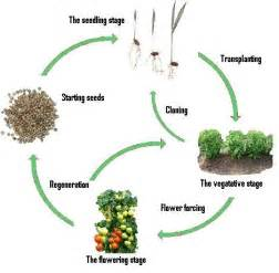 each stage of the plant life cycle easily explained