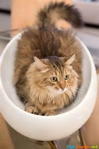 Little Ceramic Cat Bed Design