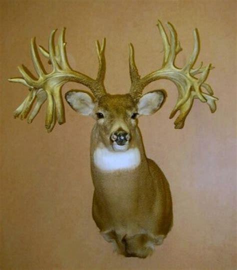 Missouri Record Missouri Monarch The World Record Non Typical Whitetail Buck