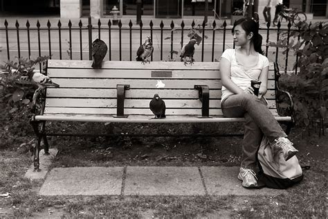 bench girl daily dose of imagery pigeons and the girl
