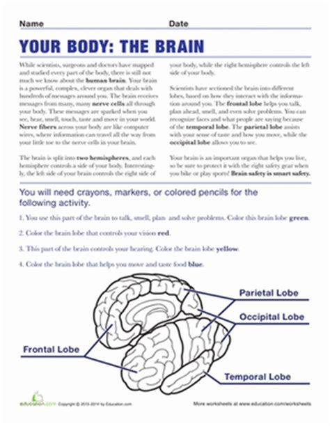 Whats In Your Brain Worksheet