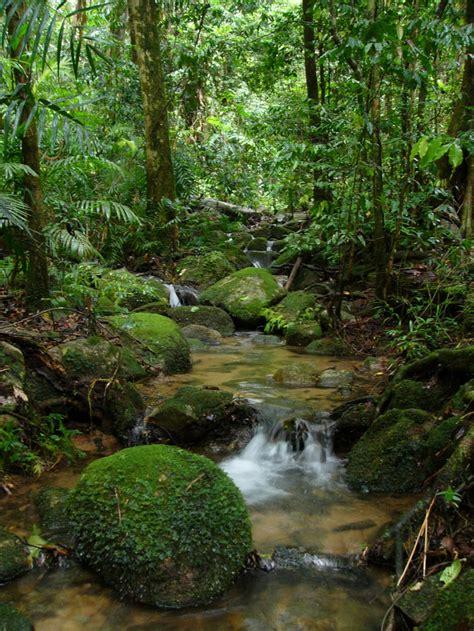 por una gentil floresta coisas do brasil a floresta amazonica