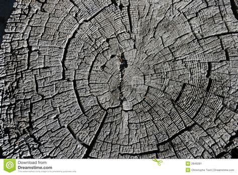 tree cross sections pine tree cross section stock image image 2849281