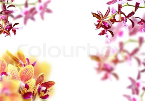 orchideen gestell orchid frame stock photo colourbox