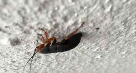 eradipest services pest services all services are offered in the