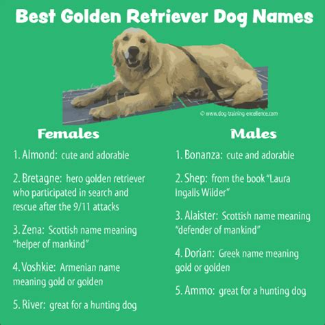 golden retriever names golden retriever names list images