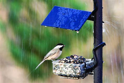 images of love birds in rain birds in rain wallpapers hd pictures one hd wallpaper