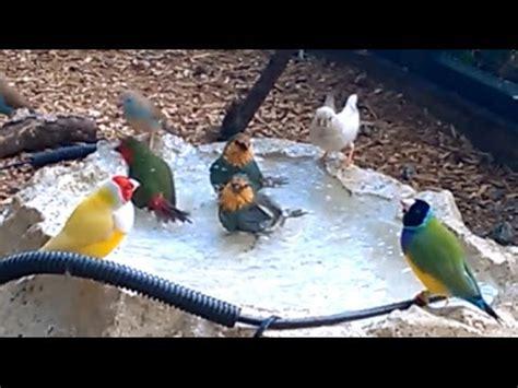 build  simple aviary wateringbathing system