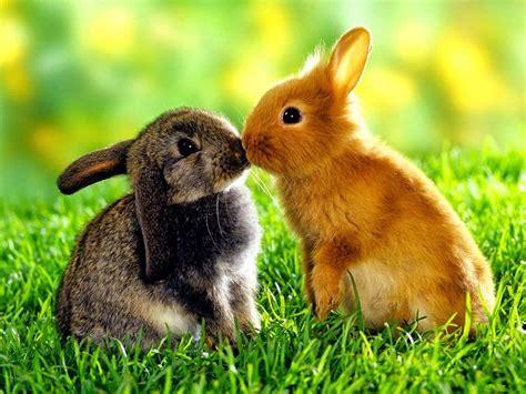 imagenes animales y naturaleza la naturaleza y los animales mishell mendoza