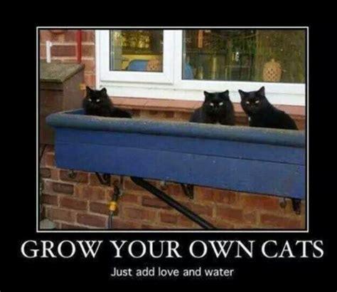 Gardening Memes - funny gardening memes plus friday frivolity linky party