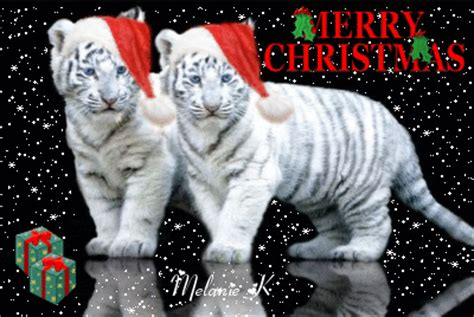 merry christmas tiger picture  blingeecom