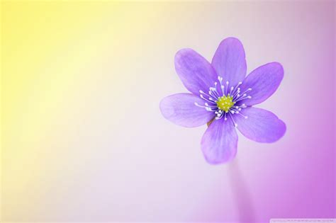 cute themes for desktop free download cute backgrounds for desktop 183