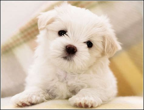 small sized dogs small sized dogs pet photos gallery gx3nmp62jz