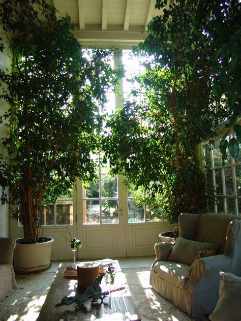 inside garden best 25 indoor trees ideas on indoor tree