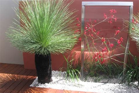 Swimming Pool Designer Selecting The Right Plants For Coastal Regions