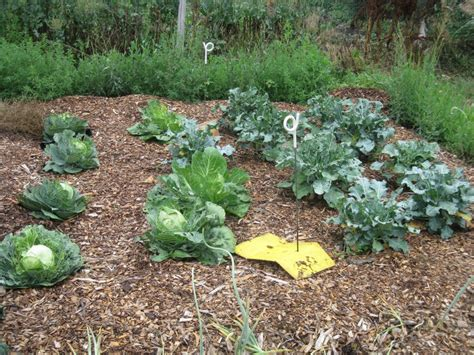 Back To Gardening by Garden Tour S Quot Back To Quot Garden Experiment
